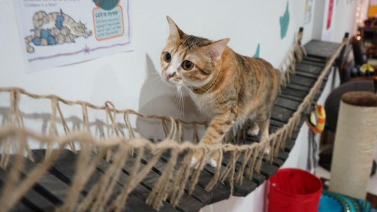 музей кота кота