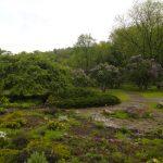 «Неделя сирени» в ботаническом саду  10