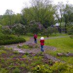 «Неделя сирени» в ботаническом саду  15
