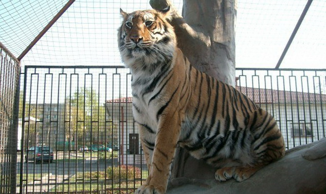 Минский зоопарк – уникальный музей живой природы 15