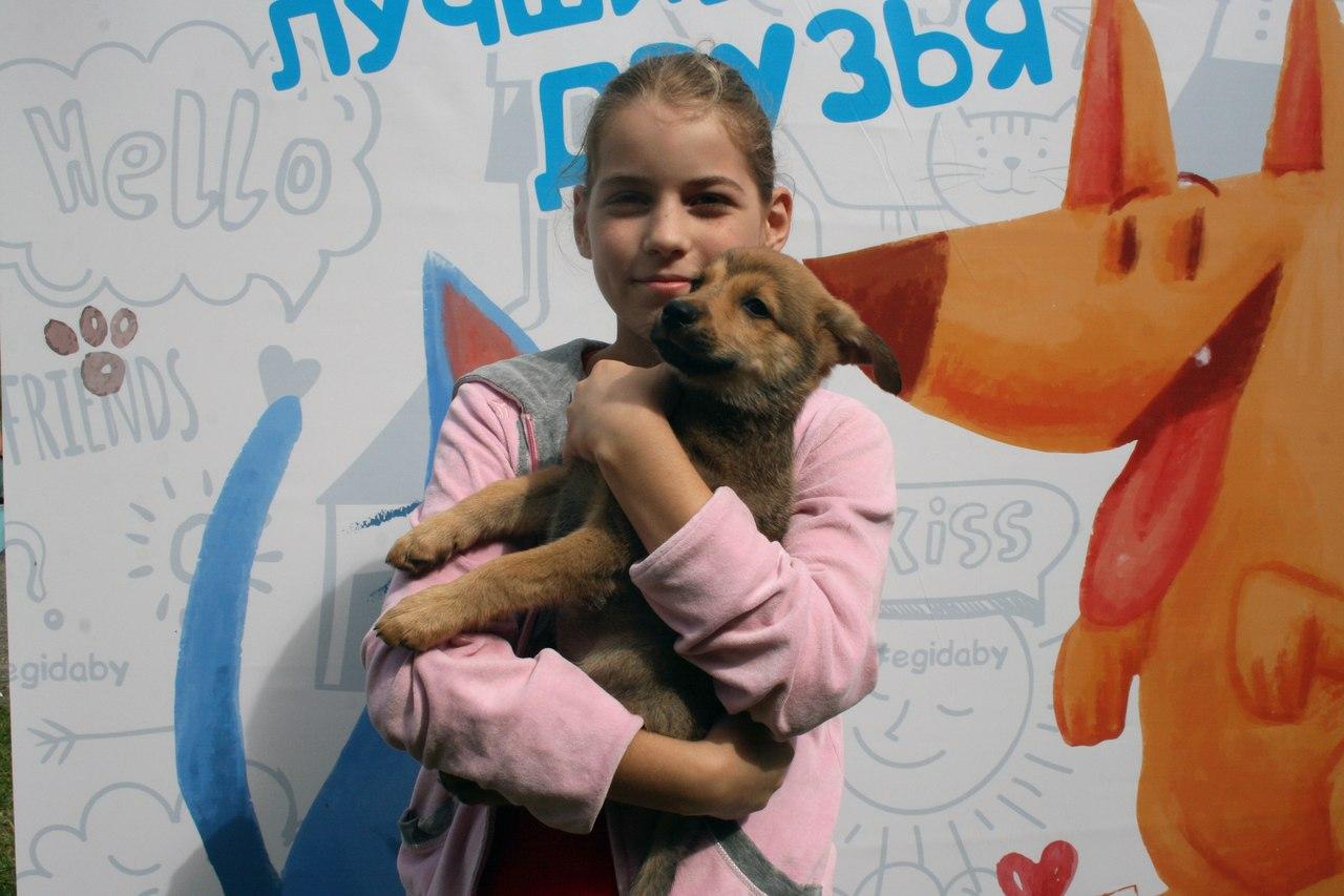Не в ответе за тех, кого приручили: кто занимается проблемой бездомных животных в Минске? 13