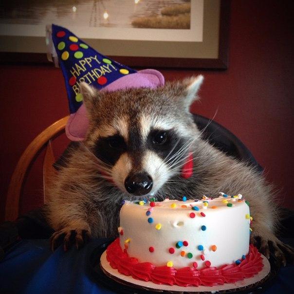 День рождения – грустный праздник 14
