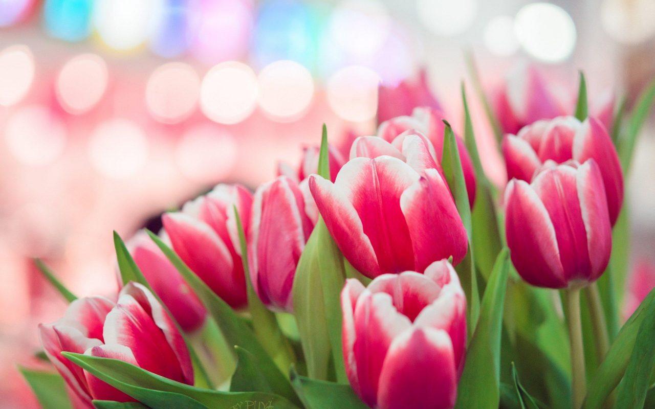 В чем прелесть тюльпанов? 14