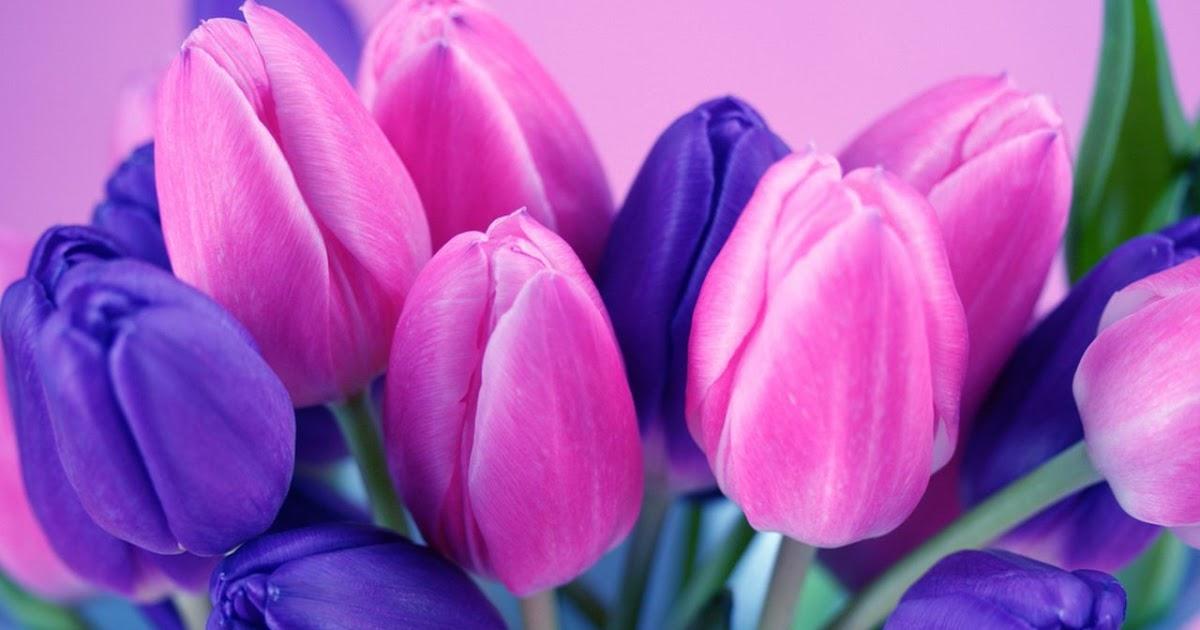 В чем прелесть тюльпанов? 13
