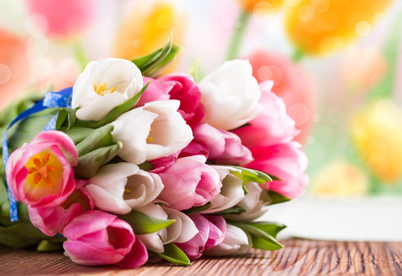 В чем прелесть тюльпанов? 16