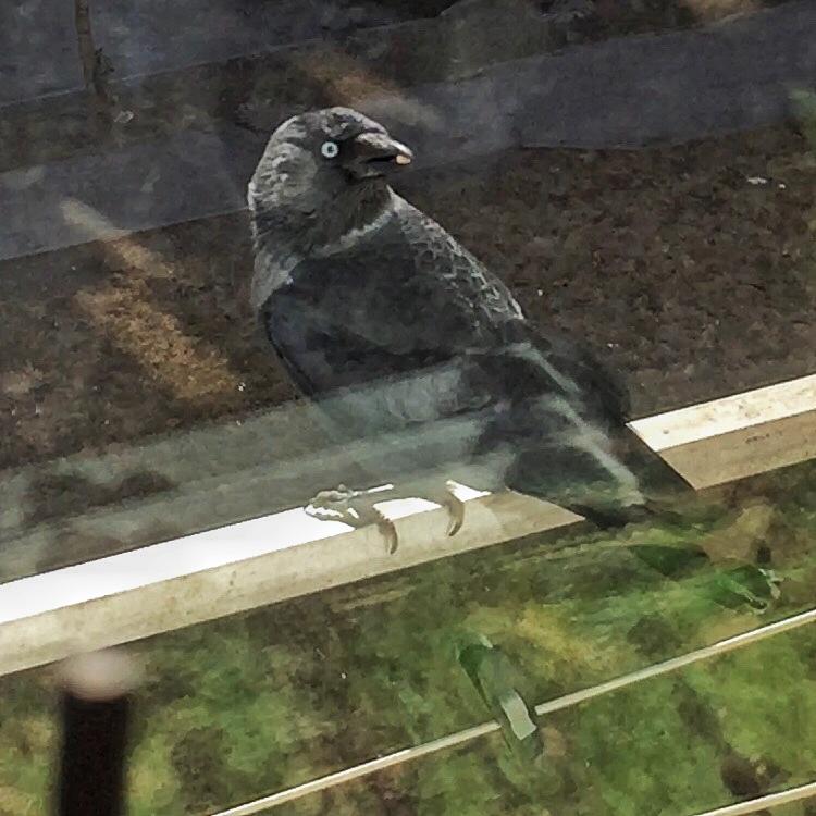 Кормушка для птиц как щит от голодной смерти 21
