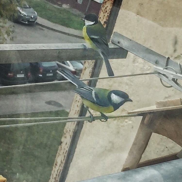 Кормушка для птиц как щит от голодной смерти 17