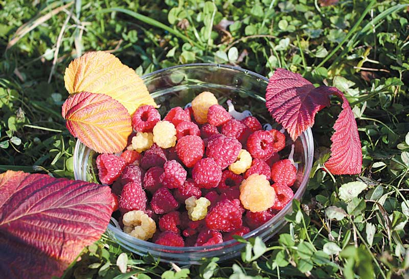 Август – лучший месяц для садоводства 11