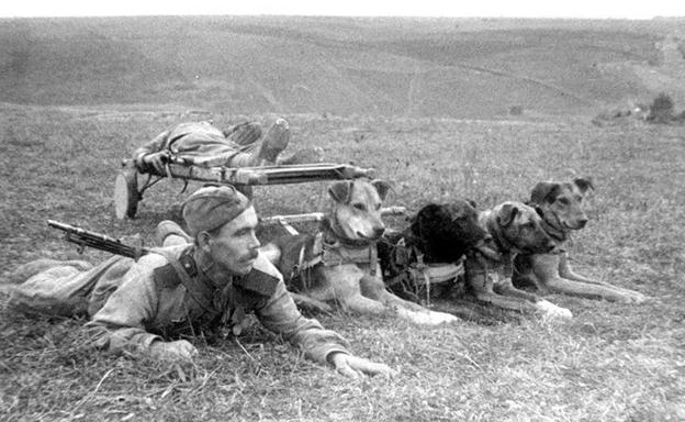 Животные на войне 7