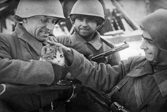 Животные на войне 8