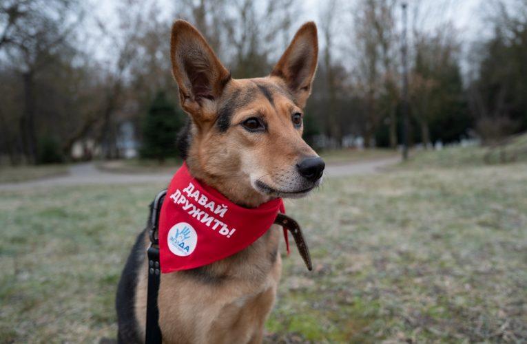 Не только человек питает надежду: о деятельности собачьего приюта «ДСН»