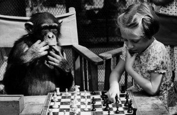 Животные и интеллект. Опаснейшие виды. 20