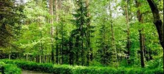 Первое впечатление китайского студента о Беларуси и ее природе 25