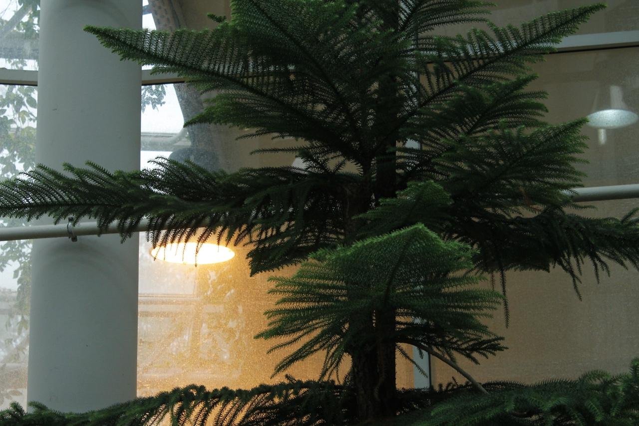 Магия минского вдохновения: по аллеям ботанического сада 16