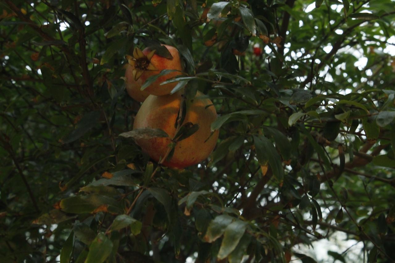 Магия минского вдохновения: по аллеям ботанического сада 17