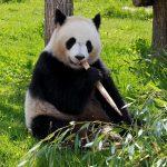 """""""Самая трудная дорога"""" к закону о защите животных в Kитае 21"""