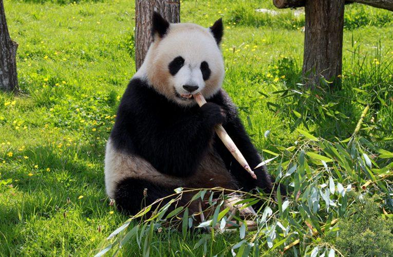 «Самая трудная дорога» к закону о защите животных в Kитае