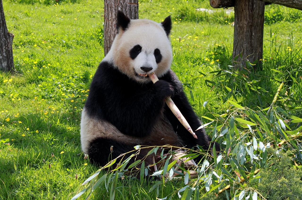 """""""Самая трудная дорога"""" к закону о защите животных в Kитае 7"""