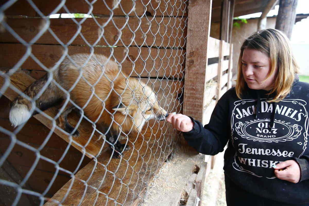 Чем больше мы помогаем другим, тем больше помогаем себе. Клоунотерапия и центр для животных «Сирин». 18